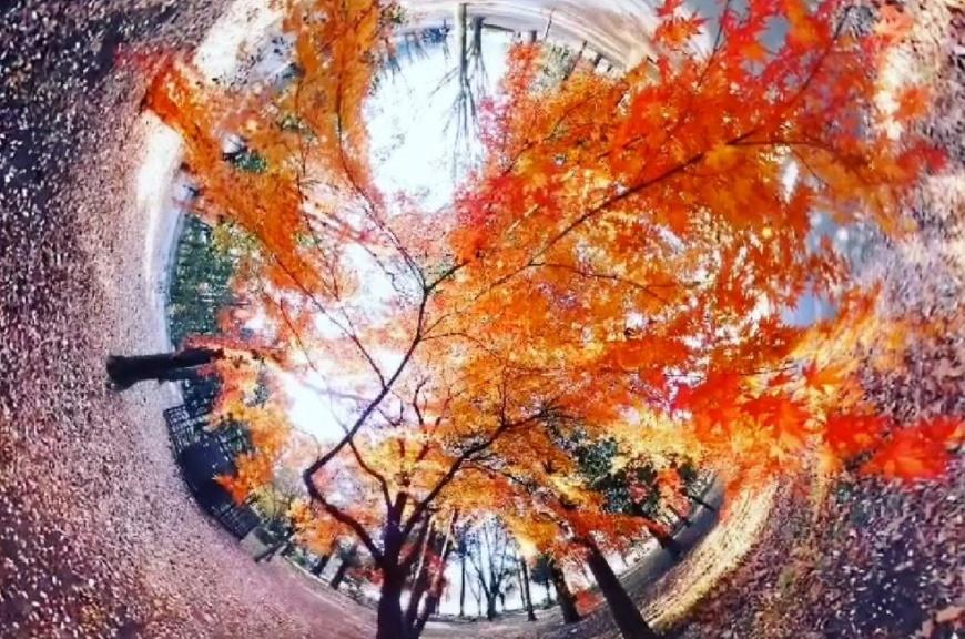 <br /> (提供)ベクノス <br /> (表紙写真)RICOH Quarterly HeadLine Vol.33 2021 Autumn